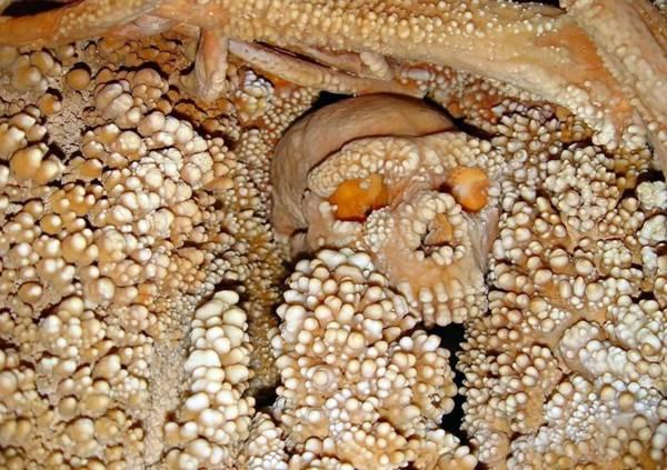 I resti dell'uomo di Altamura (fonte: Soprintendenza Archeologia della Puglia)