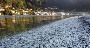 sardine_fish_kill_750