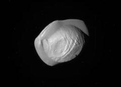 PAN: una luna a forma di raviolo tra gli anelli di Saturno