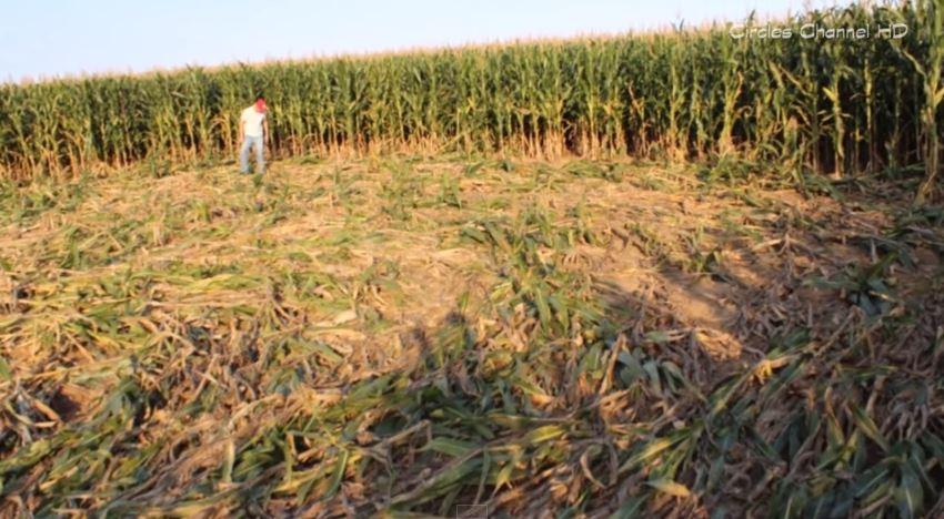 Crop Circles 2015 - Içara - Santa Catarina, Brazil - 18th march 2015 - Agroglifos Brasil 2015